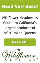 Varroa Sensitive Hygiene VSH Breeder Queens