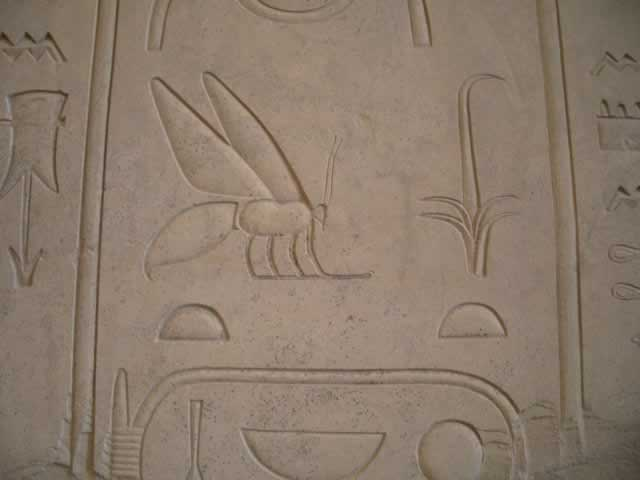 Eygptian honey bee hieroglyphic
