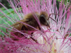 Learn about honey bees