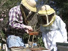 Beekeeper education