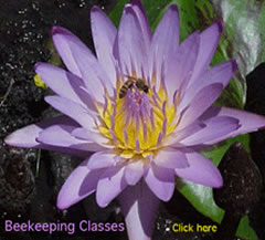 Beekeeping classes