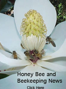 Honey Bee and Beekeeping News