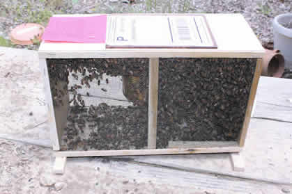 Starting a Beehive with Package Bees - photo#7