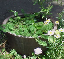honeybee water garden tub